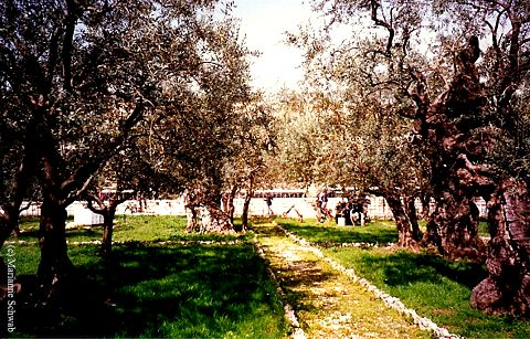 Nice For Example, The Garden Of Gethsemane Is Probably No More Than A Fifteen To  Twenty Minute Walk From Where The Temple Steps In Jerusalem Were Located  And So ...